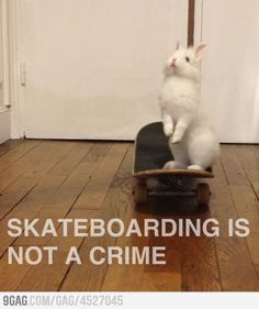 Skate b rabbit Skateboarding, Skating, Crime, Rabbit, Cute Animals, Pretty Animals, Roller Blading, Skateboard, Rabbits