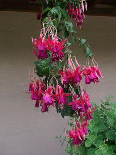 Plants, Jewelry, Jewlery, Jewels, Flora, Jewerly, Plant, Jewelery, Planting