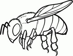 how to draw a honey bee step 10