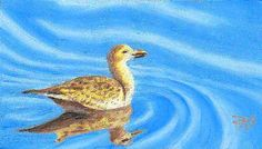 Oil pastel painting of a brown seabird with reflections on sky blue rippled water painted by Robert A. Sloan from a photo by Wendell Dennis...