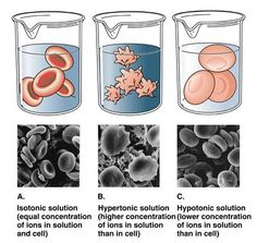 Illustrations and pictures that show the effects of osmosis Study Biology, A Level Biology, High School Biology, Biology Lessons, Cell Biology, Ap Biology, Science Biology, Science Education, Life Science