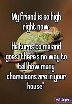 """My friend is so high right now. He turns to me and goes """"there's no way to tell how many chameleons are in your house"""""""