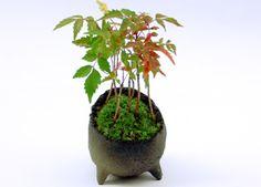 陶芸作家 真山 茜さんのお店(益子):花のセレクトショップ・ブラウズBROWSE