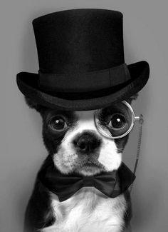 Dapper Doggie!!