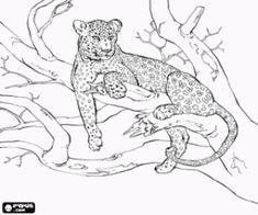 Leopard resting on the branch of a tree coloring page