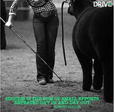 Livestock showing<3 Livestock Judging, Livestock Farming, Showing Livestock, Pig Farming, Showing Cattle, Country Girl Quotes, Country Girls, Show Cattle Barn, Cow Quotes