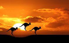 Kakadu national park – travel to australia - tour architect Happy Australia Day, Australia Holidays, Australia Tours, Moving To Australia, Visit Australia, Australia Travel, Kakadu National Park, National Parks, Kangaroo Jumps