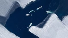 Pathogens find new hosts as Arctic ice melts | Health | The Earth Times