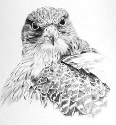 Gyrfalcon graphite drawing Boat Drawing, Graphite Drawings, Birds Of Prey, Owl, Fine Art, Wood Burning, Artwork, Animals, Cover