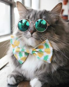 Top 25 Cats in Glasses Cute Cats And Kittens, Baby Cats, Cool Cats, Kittens Cutest, Pretty Cats, Beautiful Cats, Animals Beautiful, Cute Baby Animals, Funny Animals