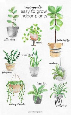 A Guide to Caring for Easy to Grow Indoor Plants i. A Guide to Caring for Easy to Grow Indoor Plants including Plantas Indoor, Cactus Plante, Decoration Plante, Gardening Zones, Inside Plants, Jade Plants, Green Plants, Garden Care, Garden Tips