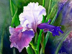 Purple IRIS  PRINT of Watercolor by Ginny Wall by AllNatureSings, $15.00