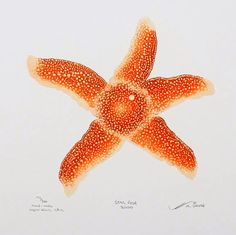 """""""Starfish 2000"""" by Matthew Smith (10x10 copperblock etching, $220 framed)"""