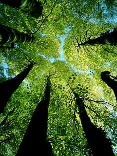 Month of sundaes beautiful world, beautiful places, trees beautiful, looking up, tree All Nature, Nature Tree, Amazing Nature, Tree Forest, Natural World, Belle Photo, Mother Earth, Beautiful World, Trees Beautiful