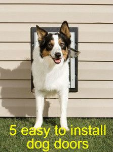 1000 Images About Dog Doors For Walls On Pinterest Pet Door Doors And Dogs