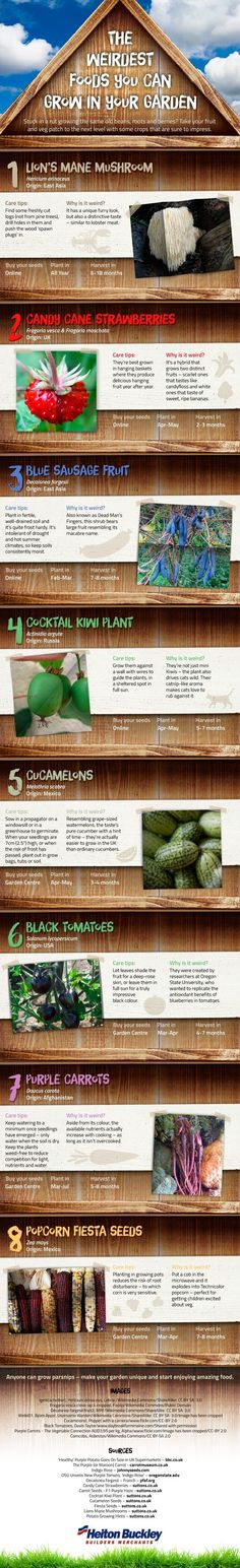 This infographic lists 8 strange and exotic foods that you can easily grow yourself at home - from lion's mane mushrooms to candy cane strawberries. >> https://www.finedininglovers.com/blog/food-drinks/gardening-exotic-ingredients/