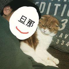 無理矢理スリスリする旦那。。。 みーちゃんの顔が😂😂😂笑  #スコティッシュフォールド#scottishfold#ねこ#猫#愛猫#cat#catstagram#にゃんすたぐらむ#ねこ部#スコ#垂れ耳スコ #スコティッシュフォールド垂れ耳#猫#ねこのいる生活#可愛い#親バカ#迷惑そう#あからさまに顔に出す#ちょっ#やめてくれます?#って顔#でも逃げない#優しいにゃんこ