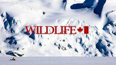 NuuLife presents Wildlife: Teaser