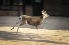 Grand Canyon South Rim, Grand Canyon Arizona, Deer, Wordpress, Around The Worlds, Urban, Gallery, Photos, Animals