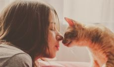 Professional Pet Sitters Week: 6 Signs Your Kitty Loves Your Cat Sitter - CatTime Funny Cat Photos, Funny Cat Videos, Funny Pictures, Crazy Cat Lady, Crazy Cats, Kittens Cutest, Cute Cats, Funny Cats, Colley