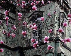 bluepueblo:  Spring Blossoms, Paris, France photo via shay
