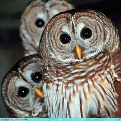 This is one of my fave owl pics. I made it a special someone's FB profile pic once upon a time ago...