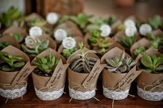 Casamento leve, divertido e DIY – Camila Diy Wedding, Diy Presents Wedding Favors And Gifts, Succulent Wedding Favors, Party Favors, Wedding Presents For Guests, Top Wedding Trends, Diy Wedding, Rustic Wedding, Dream Wedding, Light Wedding