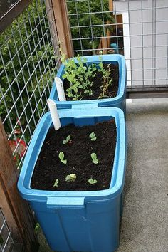 Homemade grow box self-watering Urban Gardening Part 1. Is that a laundry basket in a tote? That would be such a cool winter project for school.