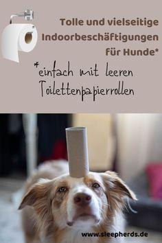 Es müssen nicht immer teure Spielzeuge sein. Laste Deinen Hund mit einer leeren Klopapierrolle aus! Bullying, Animals, Dog, Pets, Cats, Dog Snacks, Dog Presents, Dog Care, Diy Dog