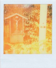 PX 680 COLOR SHADE BETA TEST FILM by the Impossible Project 2011 Kamera: Polaroid Impulse no warming up, no shielded from the light. Color Shades, Photography, Painting, Art, Craft Art, Photograph, Painting Art, Kunst, Photo Shoot