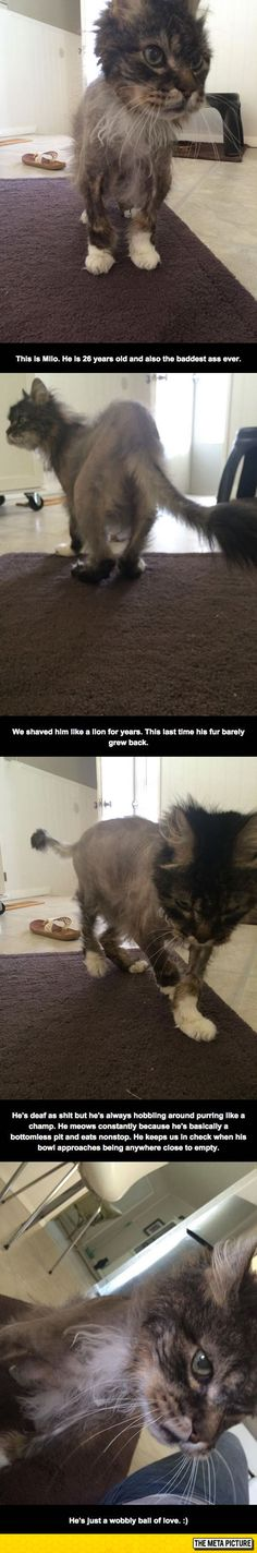 Meet Milo, The 26 Year Old Cat, miss the late Banjo who was also a cranky old man-cat