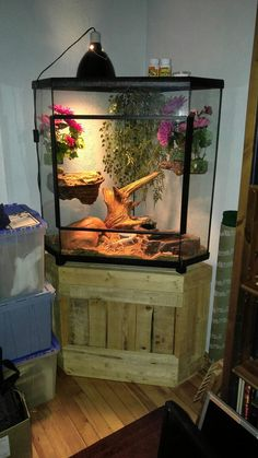 The Best Iguana Cages are Easy to Make - meowlogy Reptile House, Reptile Habitat, Reptile Room, Reptile Cage, Reptile Enclosure, Gecko Cage, Lizard Cage, Terrariums Gecko, Terrarium Reptile
