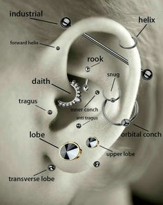 A guide to some ear piercings, featuring my personal favorite Tragus and rook✨ – Marina H. A guide to some ear piercings, featuring my personal favorite Tragus and rook✨ A guide to some ear piercings, featuring my personal favorite Tragus and rook✨ Ear Piercing Diagram, Ear Piercings Chart, Cool Ear Piercings, Piercing Chart, Ear Peircings, Types Of Ear Piercings, Ear Piercings Industrial, Different Ear Piercings, Ear Piercing Guide