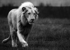 reminders of Kruger