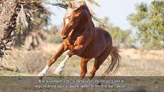 M. de la Guérinière a dit « Le cheval vicieux est celui qui, à force de coups, est devenu malin au point de mordre, de ruer et de haïr l'homme ».