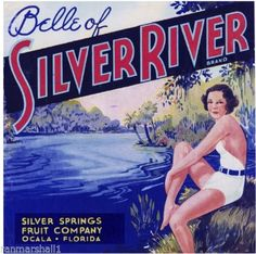 Ocala Florida Belle of Silver River Orange Citrus Fruit Crate Label Art Print Vintage Labels, Vintage Ads, Vintage Posters, Retro Ads, Vintage Signs, Vintage Travel, Ocala Florida, State Of Florida, Florida Style