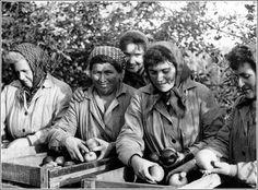 Almaszedő asszonyok az 1960-as években.