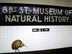 Subway Tiles at the Museum of Natural History