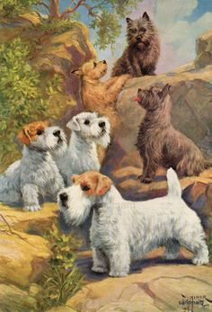 Vintage Dog Illustration Sealyham and Cairn Terriers