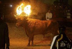 El Toro Jubilo: ¿tortura o festejo?