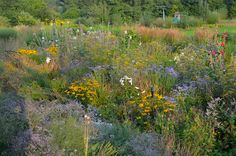 Noel's Garden Blog: Its all in the mix..... resources for understanding Mixed Planting.