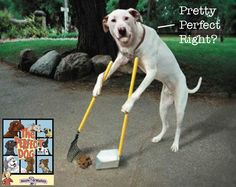 Training a dog is the responsible thing to do for both of you. Training your dog the right way will require you to learn a lot about canine behavior. Here are some advice on how successfully train your dog or find a trainer. Funny Dogs, Cute Dogs, Funny Animals, Cute Animals, Funny Pitbull, Animals Dog, Funny Fails, Humorous Cats, Cat Fails