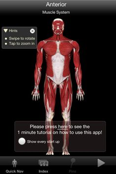 App that was recommended by massage therapist.  Called iMuscle & has exercises plus stretches for individual muscles.