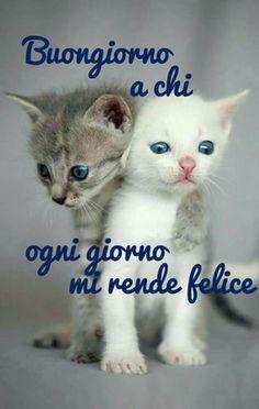 gatti cuccioli teneri Good Morning Gif, Good Morning Quotes, Italian Memes, Day For Night, Happy Day, Good Day, Kittens, Cute Animals, Animation