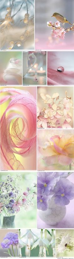 Good Morning, girls....what a lovely soft yellow board yesterday.  Thank you!  Today, let's follow it with this pretty pale pastel mood board.  These are all bokeh images so let's try to find bokeh photography.  But if not let's keep to soft images...artwork is always welcome.  Please no bright pastels.  Have fun, ladies ♥