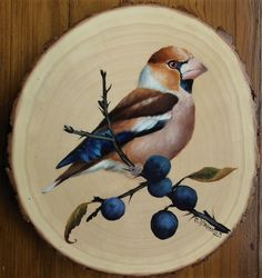 grubodziób (Coccothraustes coccothraustes) – Hobbies paining body for kids and adult Wood Burning Art, Pintura Country, Feather Art, Wood Ornaments, Bird Drawings, Bird Pictures, Wooden Art, Watercolor Cards, Pebble Art