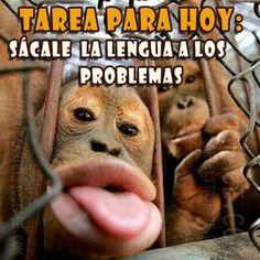Sácale la lengua