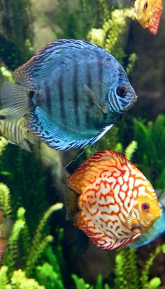 Fish Tank Moving Desktop Backgrounds Best Looking