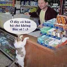 Mèo đi mua bả chó làm chi vậy Bếp từ nardi: http://noithatbepmoi.com/bep-tu-nardi.html Bếp từ hafele: http://noithatbepmoi.com/bep-tu-hafele.html Bếp điện từ: http://noithatbepmoi.com/bep-tu-bep-dien-tu.html