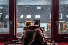 Cat couple watching the rain